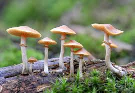 lots of wild mushrooms can be poisonous